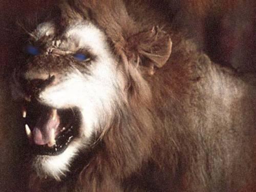Львы. приведение